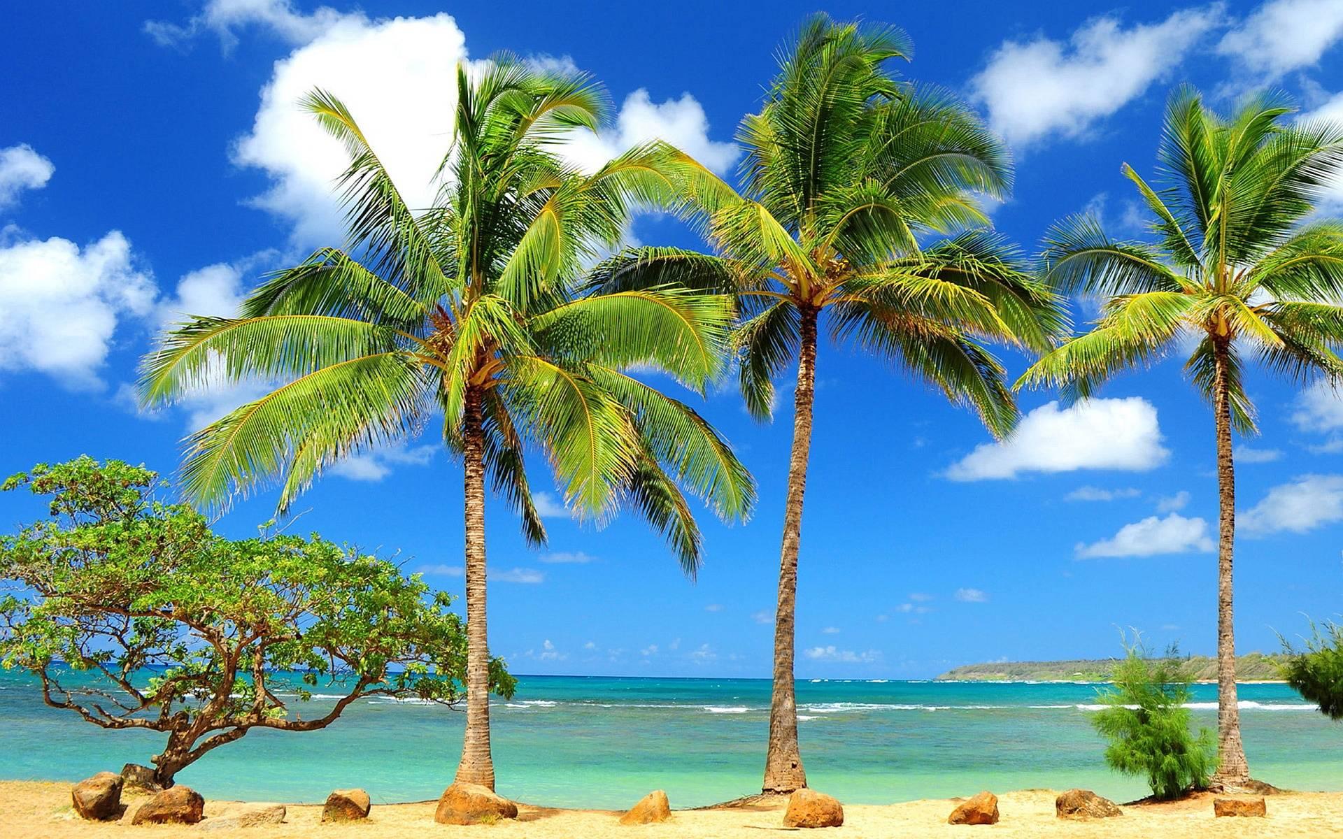 Beach Palm Tree Wallpaper 21 Atlantis Boat Rental
